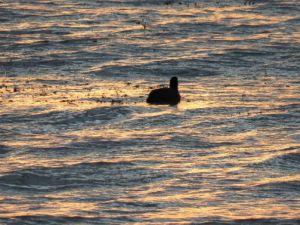 """Güneş'in Hüzünle Battığı """"Göl"""""""