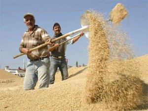 Buğday fiyatları nihayet 1 TLyi geçti