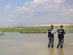 Beyşehir Gölü'ne 450 bin yavru sazan balığı bırakıldı