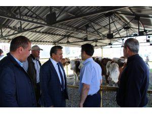 Seydişehir'de Tarımsal Kalkınma Kooperatifi üyelerine düve dağıtımı