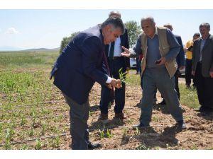 Ereğli'de dolu yağışının ardından arazide incelemeler sürüyor