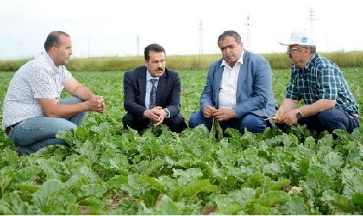 Yıllık 1 milyon ton pancar üretilen Aksaray Türkiye 3'üncüsü