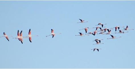 """Alçay, """"Tuzgölü'nde doğal yaşamın korunması için herkes taşın altına elini koymalı"""""""