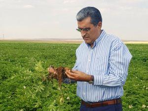 Konya Şeker'den patates üreticisine 5 milyon 200 bin lira avans