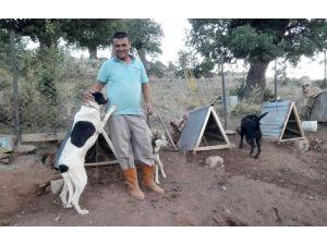 Türkiye'ye örnek uygulama: Gönüllü hayvan dostları projesi