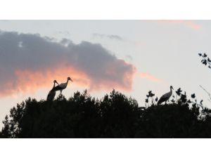 Leylekler Vadisi'nde gün batımı