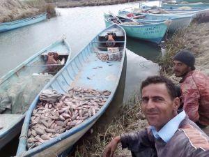Çin Sazanı Balıkçıların Korkulu Rüyası Oldu