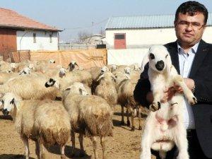 Aksaray'da Üreticiler 'Kendi İşinin Patronu Ol' Projesine Hazırlanıyor