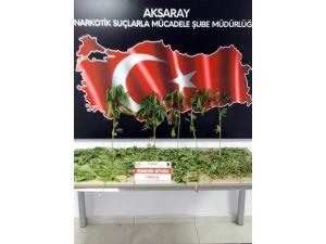 Aksaray'da Hint keneviri operasyonu
