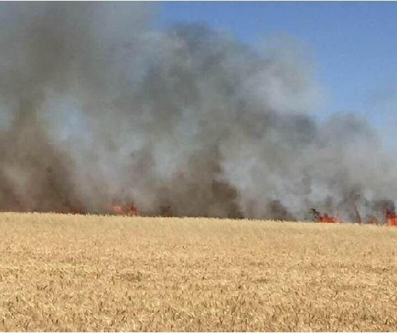 Eşmekaya'da ekin tarlasında yangın