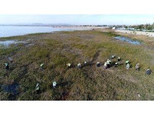 Beyşehir Gölü Kıyısındaki İstenmeyen Sucul Bitkiler Kesiliyor