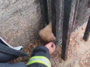 Kafası kapı arasına sıkışan köpek itfaiye tarafından kurtarıldı
