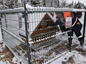 Selçuklu Belediyesi soğuk havada sokak hayvanlarını unutmadı