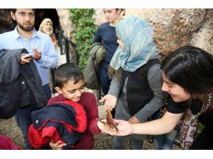 Tropikal Kelebek Bahçesi, yarıyıl tatilinde öğrencilere ücretsiz