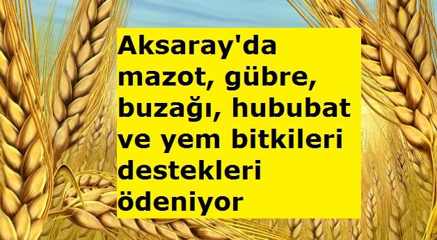 Aksaray'da mazot, gübre, buzağı, hububat ve yem bitkileri destekleri ödeniyor