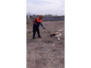 Boğazına ip dolanan ve saldırganlaşan köpek AFAD ekiplerince kurtarıldı