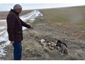 Eskil'de yavru köpekler soğukta ölüme terk edildi