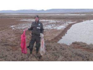 Aksaray'da Yasa Dışı Canlı Mühre İle Ördek Avına 13 Bin 415 Lira Ceza