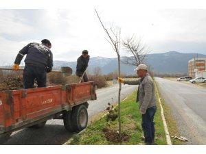 Akşehir'de ağaçlandırma ve budama çalışmaları sürüyor