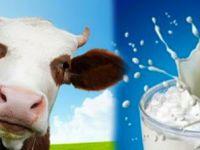 Süt üreticisine önemli destek uyarısı