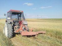 Çiftçi, dolunun vurduğu tarlaları hayvan yemi yapıyor
