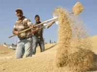 Borsada son durum! Buğday 95 Kuruş