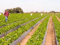 Tarım sigortasında  yüzde 28 artış