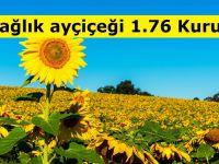 Yağlık ayçiçeği 1.76 Kuruş