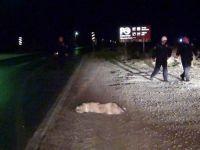 Köpeğe Çarpan Otomobil Sulama Kanalına Düştü: 4 Yaralı