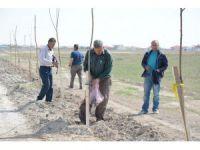 Yenikent'te 6 Bin Fidan Toprakla Buluşturuldu