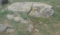 Güzelyurt'ta dev yılan