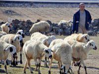 Evlenemeyen Aksaraylı Çobanların İsyanı