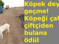 Köpek deyip geçme! Köpeği çalınan çiftçiden bulana ödül!