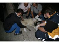Yaralı köpeğe hastane bahçesinde yardım