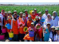Tarıma Engel Yok Projesi'nde hasat mutluluğu