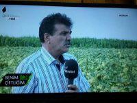 Yağlık ayçiçeği üreticisinin mutlaka izlemesi gereken VİDEO
