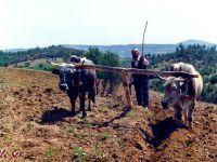 Çiftçi borç ve kredi batağında