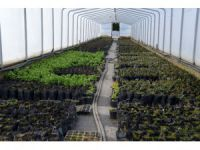 Meram'ın bitki üretim merkezi seralar