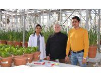 Selçuk, tuzlu topraklara uygun buğday üretmeyi hedefliyor