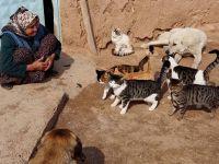 Merhamet ana! Aç kalan sokak hayvanlarına analık yapıyor!