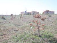Eskil'de o ağaçları kurtarmak için ilk adım