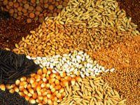Binlerce yerel tohum çeşidi nasıl kayboldu