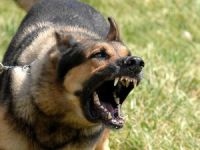 Eskil'de Köpeklerin Saldırdığı Vatandaş Ağır Yaralandı