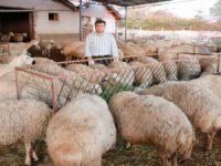 Küçükbaş Hayvan Sayısı Türkiye'de Yüzde 80, Aksaray'da Yüzde 500 Artış Gösterdi