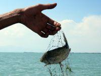Beyşehir Gölü Önemli Doğa Alanındaki balık türlerinin nesli tehlikede