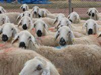 Aksaraylı üreticiler mera hayvanlarının masraflarından şikayetçi