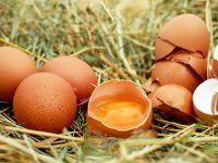 Yuh artık! Tavuk pisliği ile yumurtada organik oyunu