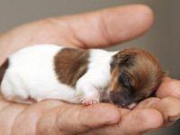 İnsafsızlığın bu kadarına da pes! Yeni doğmuş köpek yavrularını ölüme terk ettiler