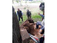 Ağaçların arasına sıkışan inek, AFAD tarafından kurtarıldı