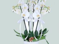 Orkide Fiyatları